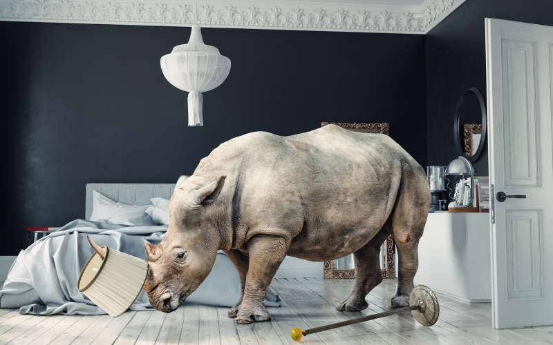 Nashorn zersört Zimmer